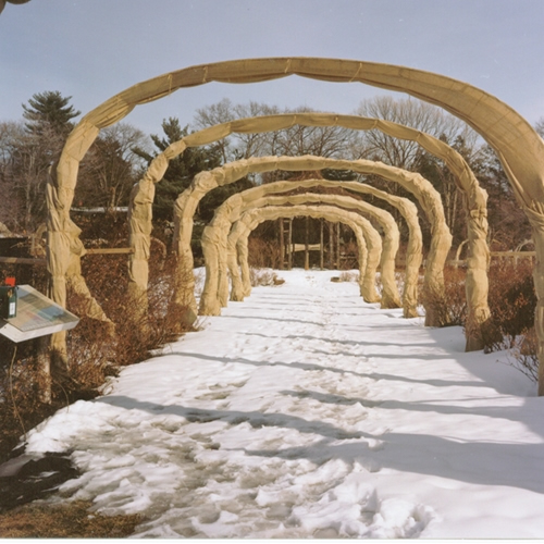 Rose Arches in Winter